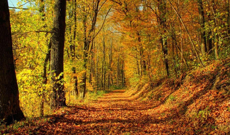 осень, красивая, осени, красивые, обсуждение, золотая, liveinternet, hello, time, красивых, everything,