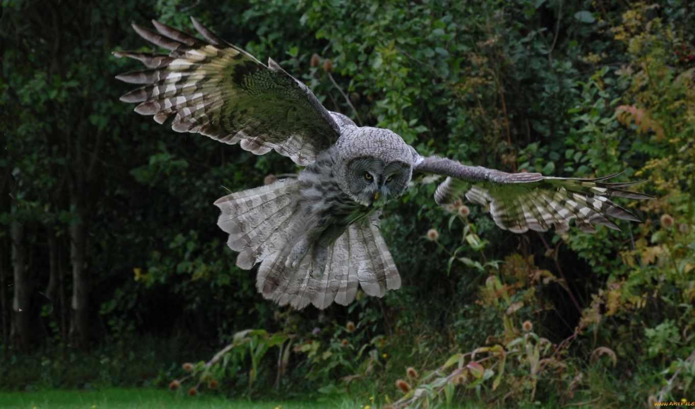 сова, птица, хищник, крылья, взгляд, полет, inspiration, art,