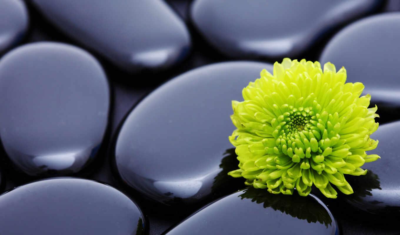 цветок, камни, макро, картинка, wallpapers, wallpaper, картинку, hd, ipad,