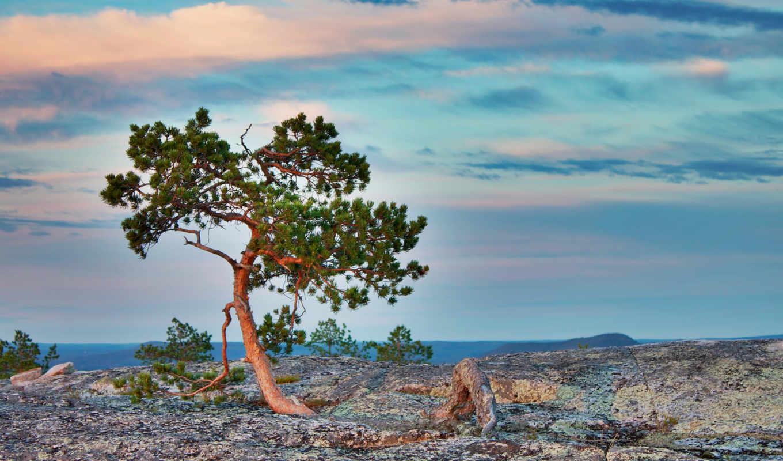 дерево, природа, landscape, горы, pine, небо, дети, height, очень, марта, море,