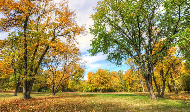 park, деревя, landscape, осень, флот,