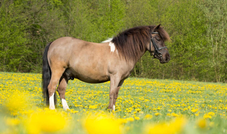 изображение, лошадь, рисунки, поле,