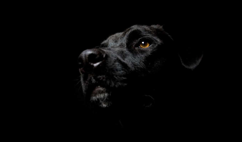 black, черных, обоях, собака, красивые, телефон, заставки, фоны,