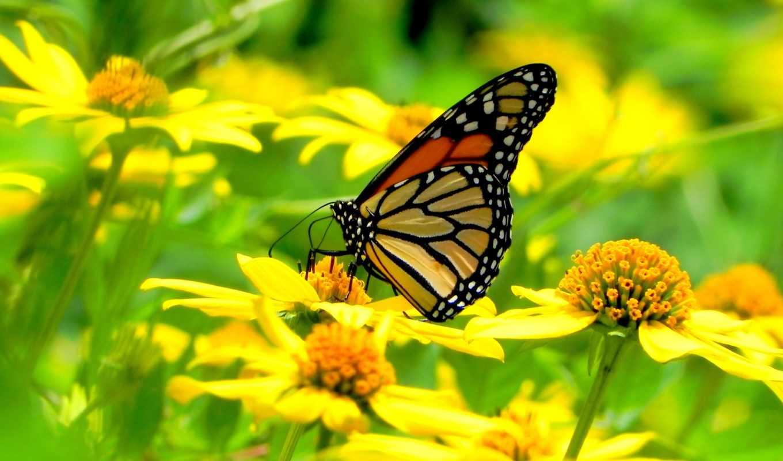 бабочки, бабочка, цветах, cvety, красивые, макро, сидит, youtube, бабочек,