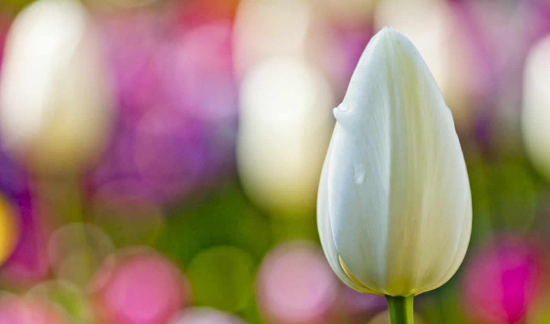 flower, белый, макро,