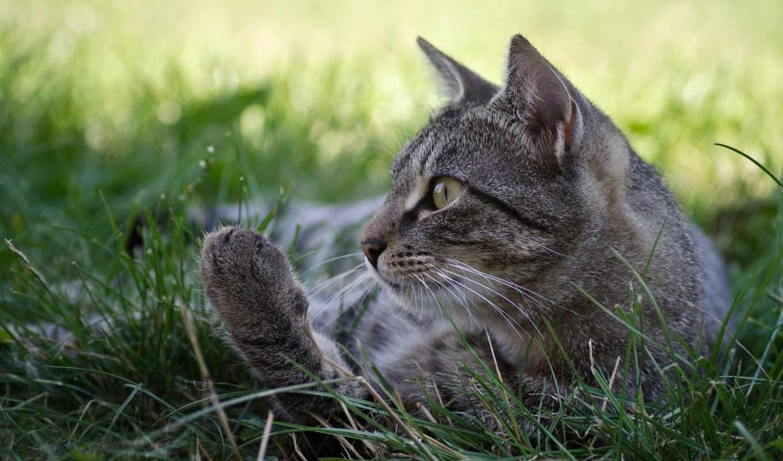 кот, has, this, been, keywords, tagged, following,