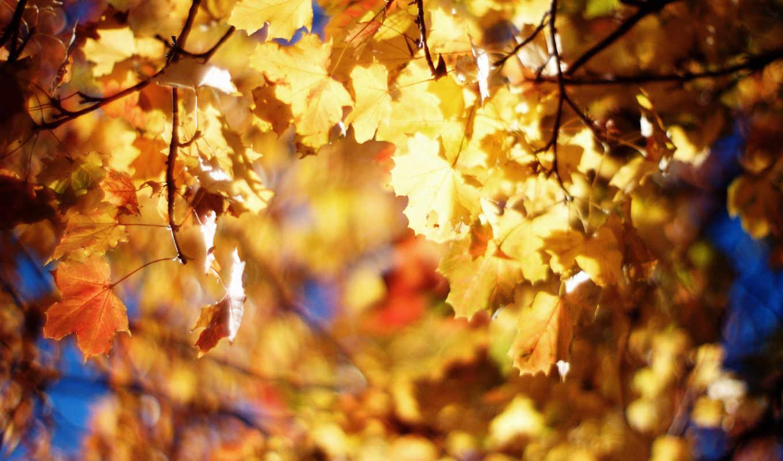 желтые, осенняя, осень,