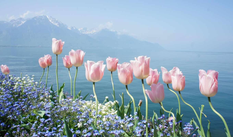 цветы, природа, mountain, been, has, весна, incredibly, горы,