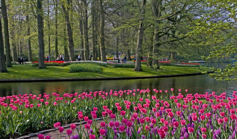 keukenhof, lisse, тюльпаны, река,