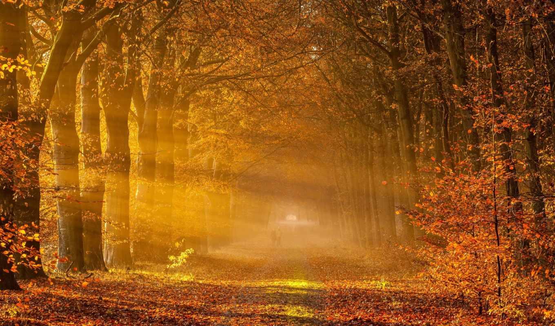 осень, деревья, дорога, пейзаж, картинка, drenthe, drowen, netherlands, rays, golden,