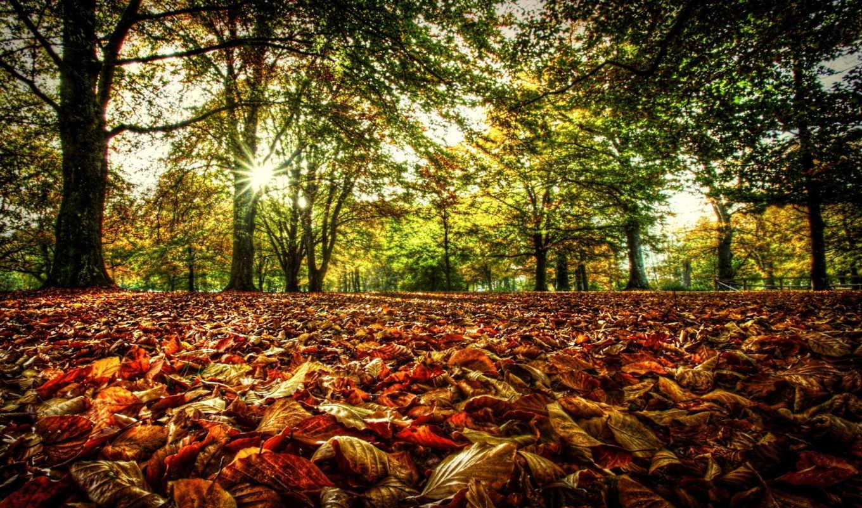 солнце, деревья, ветки, осень, лес, листья, свет, листва,