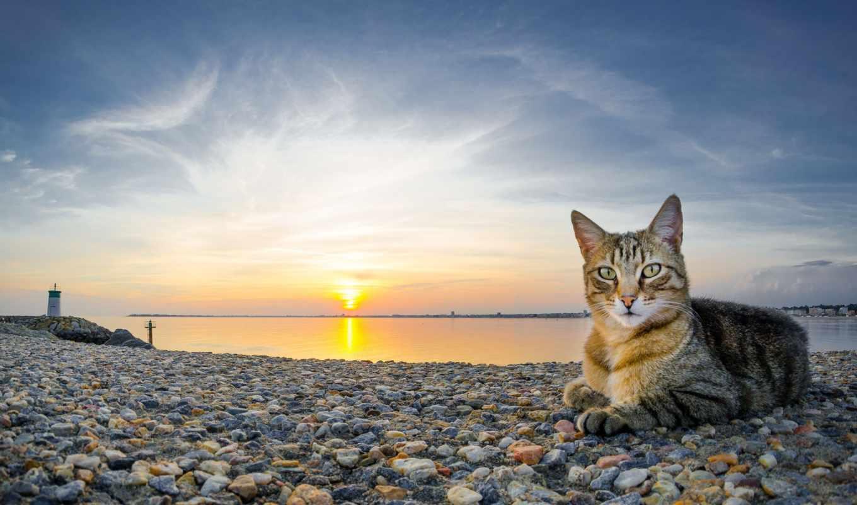 галька, море, закат, кот, пляж,