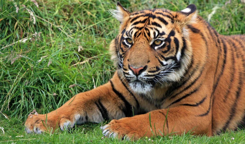 животные, наследие, foundation, тигр, найти, images, птица, pixabay, free,