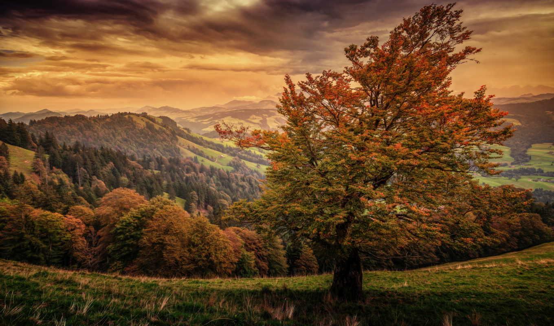 automne, paysage, sur, ecran, fonds, природа, трава, фото, бумага, art,