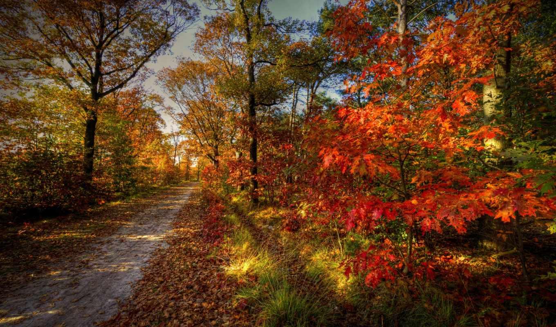 осень, природа, пейзаж, деревья, дорога, лес, небо,