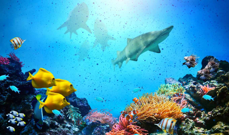 underwater, world, акулы, ocean, стоковое, coral, риф, стоковые, рыбки, акула, рыб,