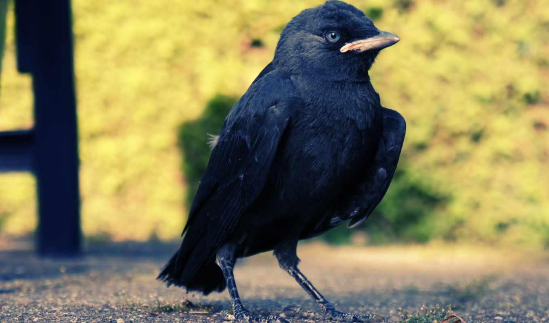 птица, birds, photos, клюв,