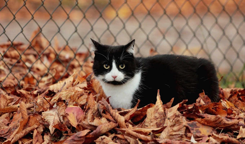 кот, листья, осень, листва,