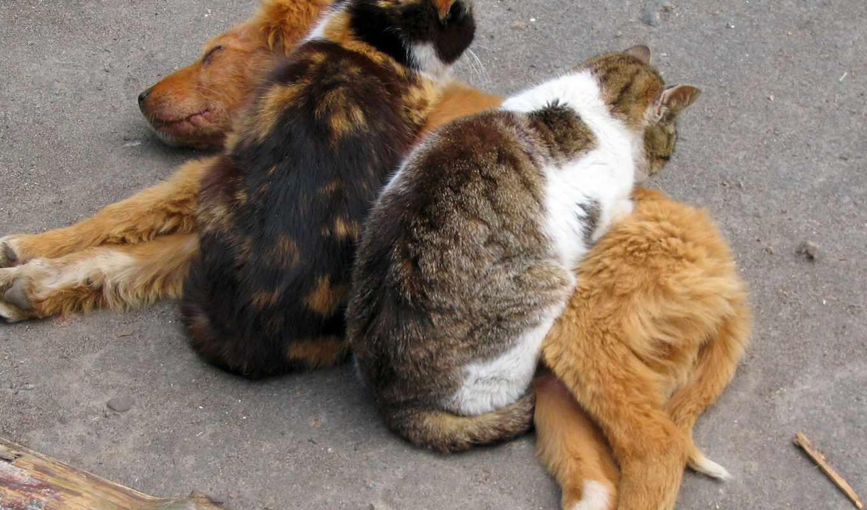 животные, кошки, собаки, коты, смотреть, истинном, обою, размере, sur, страница, ecran,