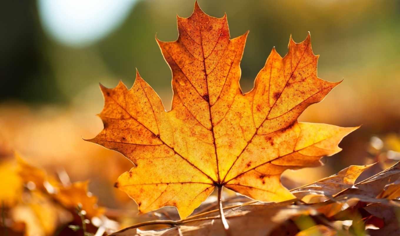 пора, осенние, осенняя, листья, osen, makro, природы, листь, krasivo,
