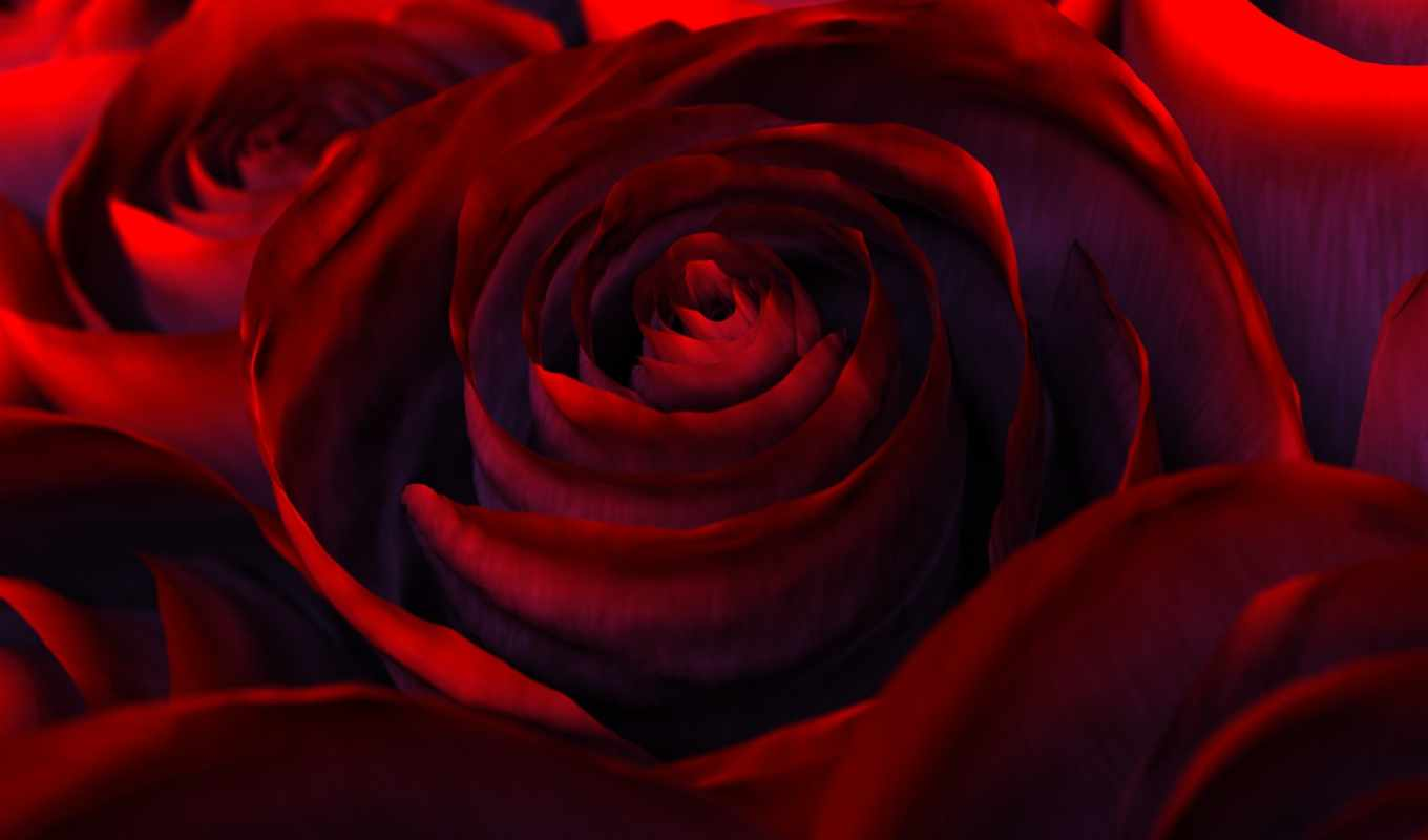wallpapers, цветы, red, роза, rose, красная, nature, flower, collection, flowers, friends, www, scraps, priroda,