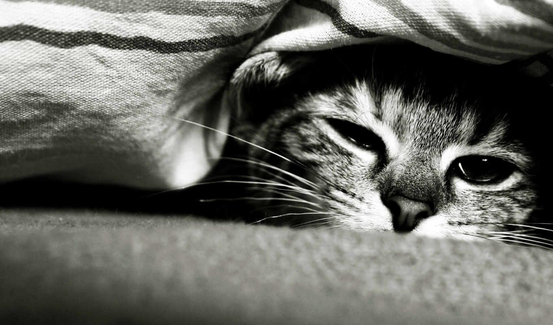 кот, обои, грустный, взгляд, кошка, котик, мордочк