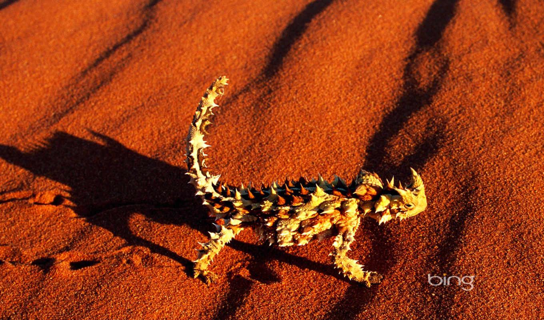 territory, northern, animals, австралия, australian, landmarks, bing, best, видов,