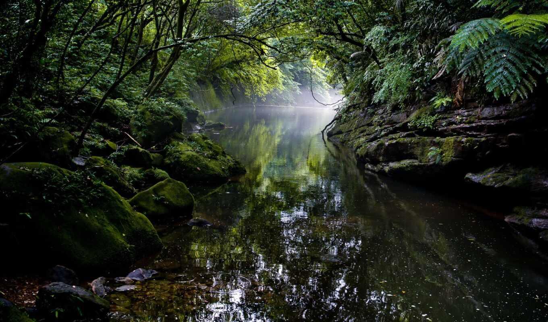 landscape, природа, natural, jungle, река, fore, bali, indonesia, водопад, дерево