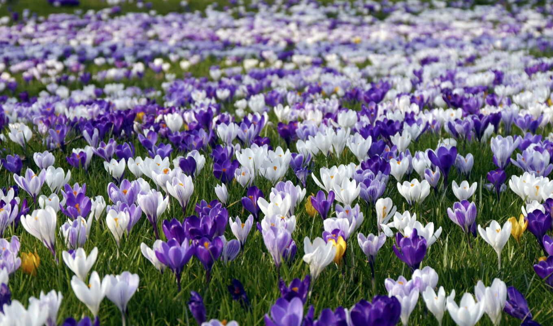 марта, photos, весна, flickr, природа, цветы,