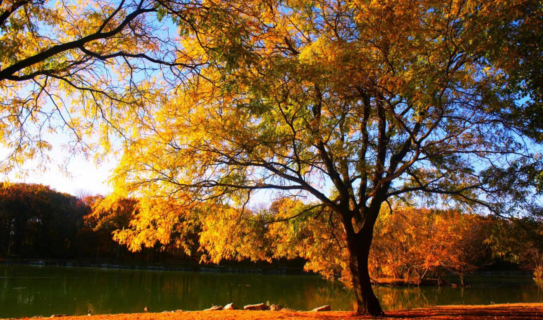 картинка, природа, года, времена, дерево, деревя, осень,