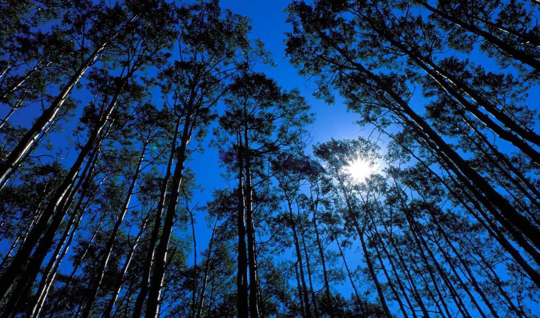 природа, красивая, самые, небо, trees, природы, grove, кб, ia, лес, красивые,