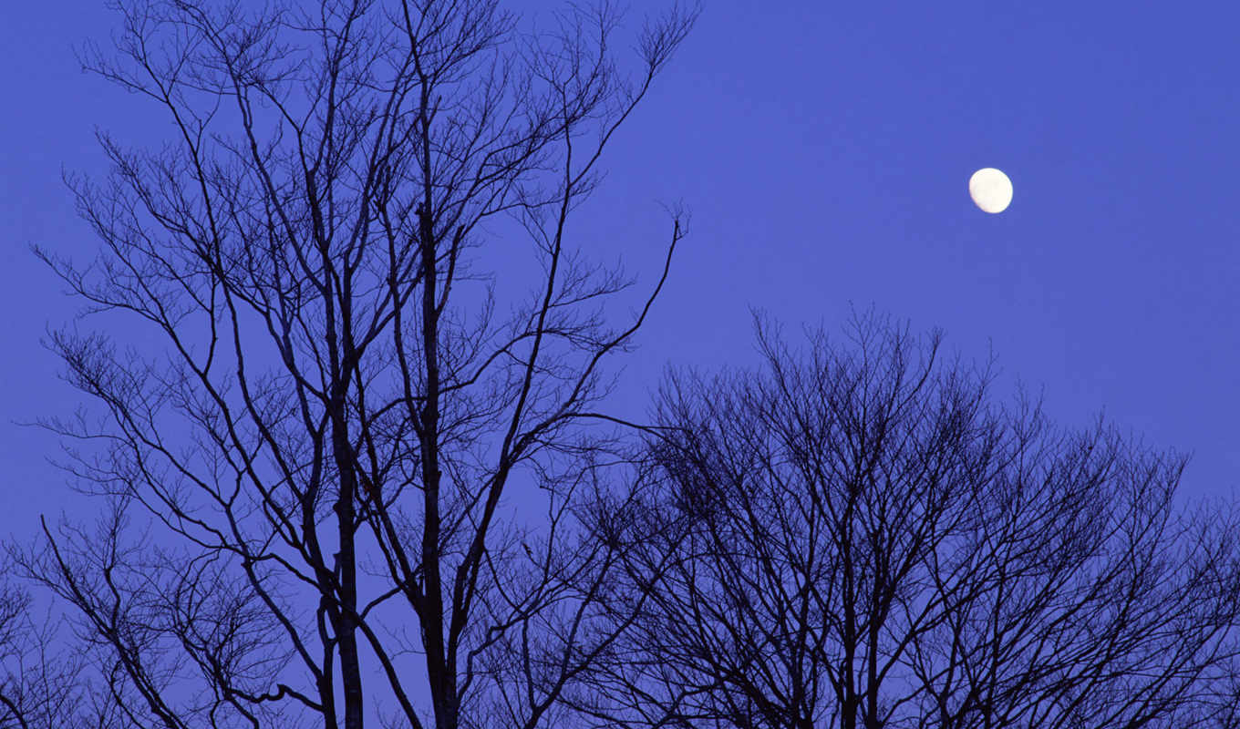 japan, night, moon, trees,