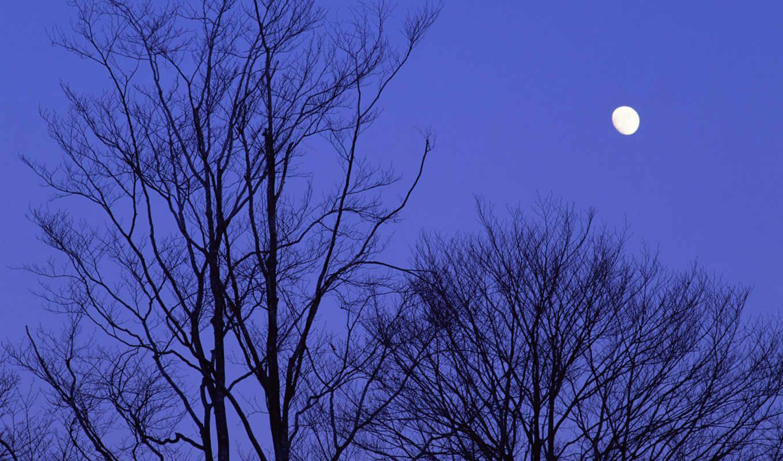 japan, night, moon, trees,