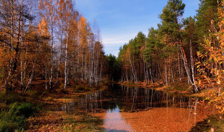 осень, река, лес, разделе,