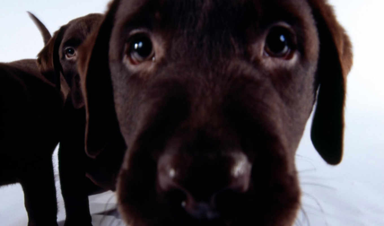 perros, fondos, perro, que, descargas, câmara, imágenes, pantalla,