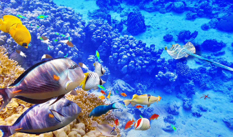 underwater, world, zhivotnye, coral, кораллы, риф,  рыбки
