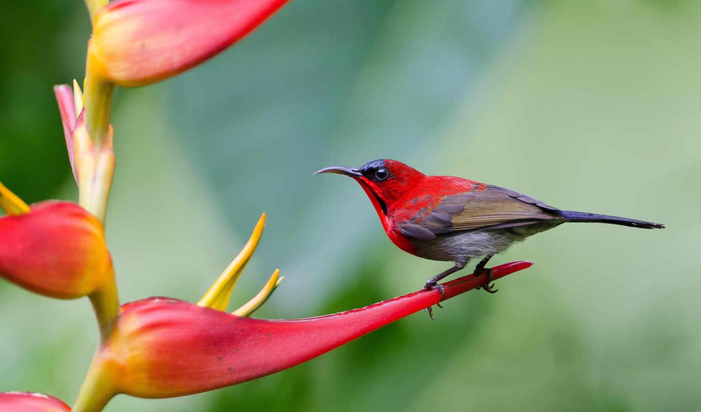 птица, птицы, острохвостая, желтоспинная, нектарницы, нектарница, крупным, zhivotnye, планом, iphone,