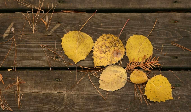 листья, доски, осень, макро, осенние, желтые, дерево,
