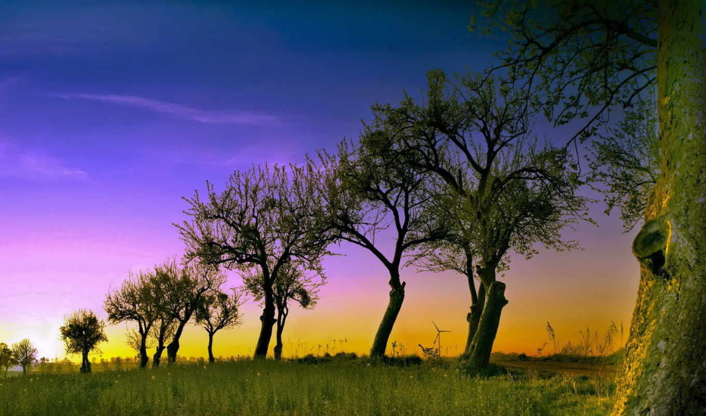 facebook, trees, created, downloads, вокруг, photographs, природы, нас, красота, природа,