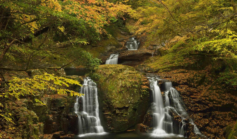 осень, пиратские, сокровища, лес, водопады, trees, landscape,