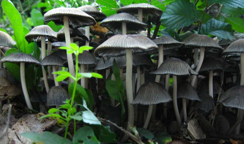 грибы, осень, листва, лес, фоны, категории, мох,