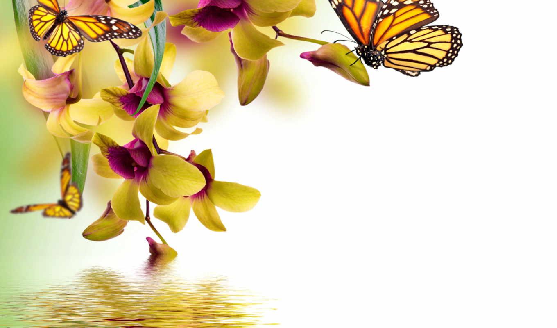 flowers, butterflies, орхидея, цветы, отражение, water,