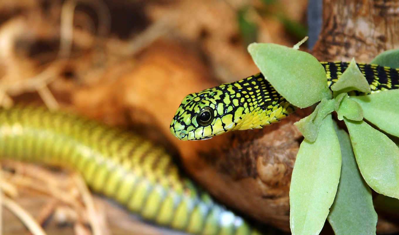 зелёный, snake, аватары, вконтакте, desktop, animal, animals, cover,