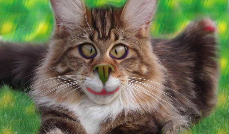 котики, коты, house, солнца, тюлень, красивые, широкоформатные, приколы, большие, весь,