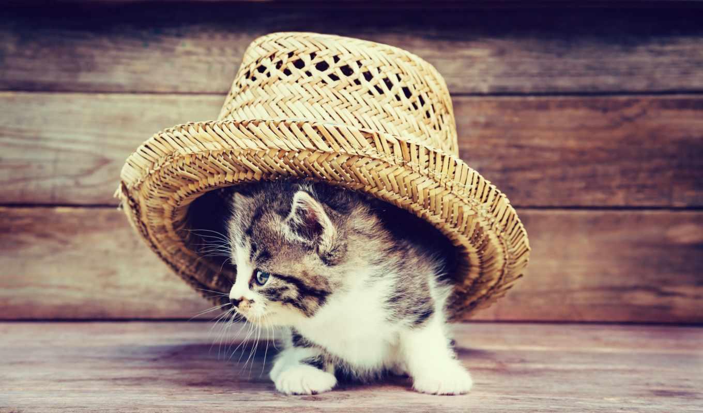 котята, кошки, zhivotnye, cats, коты, zoom, kittens, фотографий, шляпа, картинку,