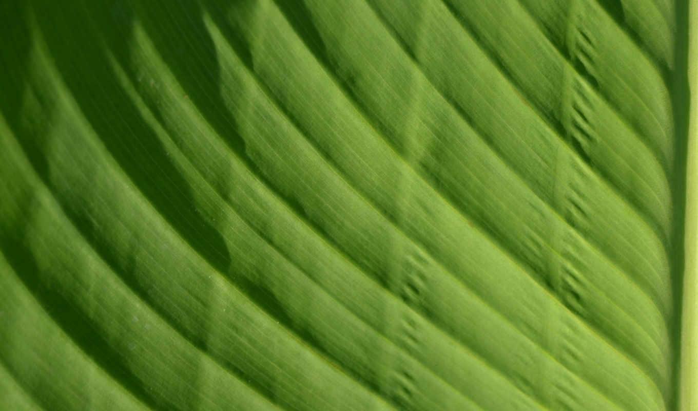 макро, насыщенный, лист, makro, яркий, зелёный,