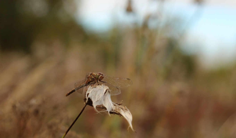 трава, стрекоза, серость,