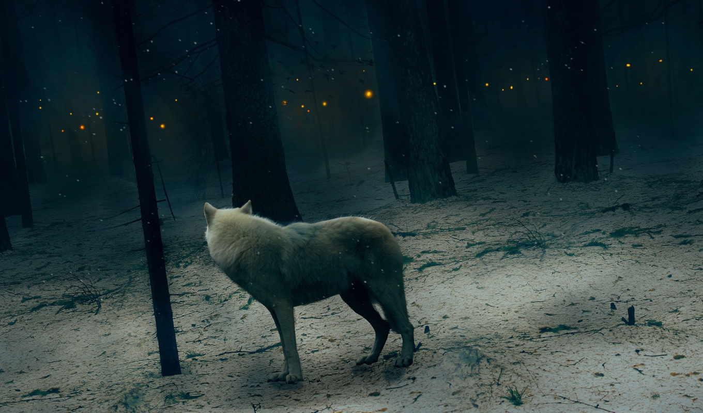 всегда можно картинки уходящего волка этот