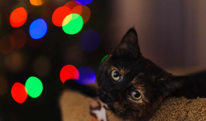 , кот, огни, черный,