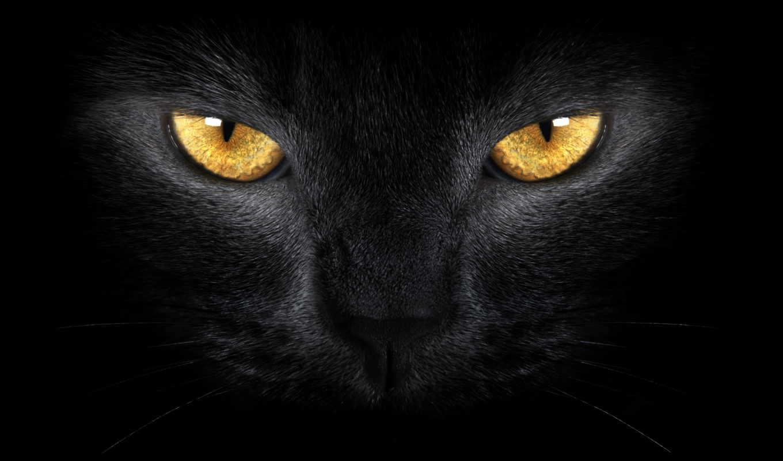 кот, черная, свет, eyes, желтые, black,